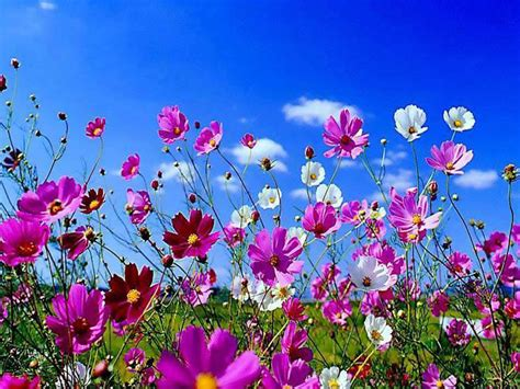 Beautiful Spring Flowers Pictures, Photos, And Images For