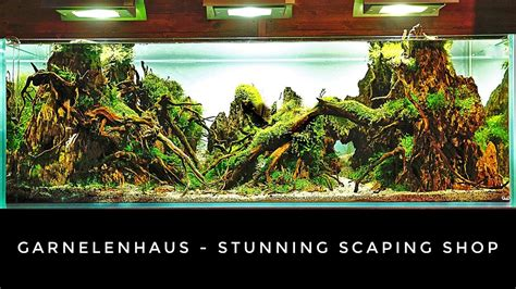 Aquascaping Shop by Garnelenhaus Stunning Aquascaping And Shrimp Shop