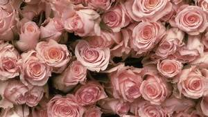 hoontoidly: Roses Tumblr Background Images