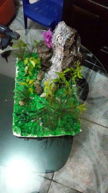 Maqueta bosque lluvioso Bosque lluvioso Maquetas de