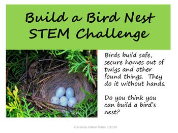 build  bird nest stem challenge  colleen phalen tpt