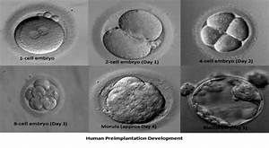 Blastocyst Culture And Transfer