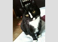 Bongo, my sweetheart RIP Cats Pinterest