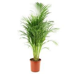 acheter plantes vertes plantes d int 233 rieur jardinerie truffaut