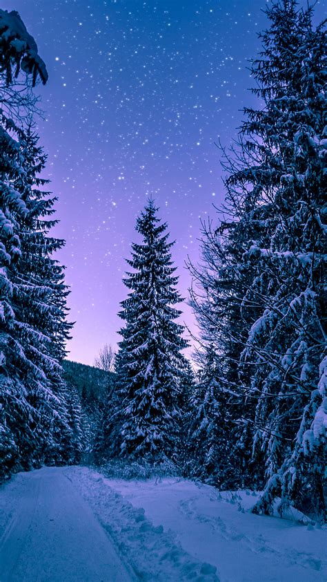 nx snow winter wood tree road night nature wallpaper
