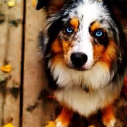Prettiest Dog Ever