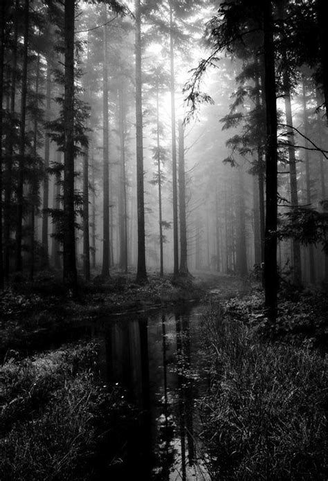 forest nature dark landscape light woods natural haunted woodland forests mystical misty trees sunrise landscapes seaside inspiration creepy background serenity
