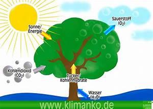 Carbon Footprint Berechnen : photosynthese klimanko klimanko ~ Themetempest.com Abrechnung