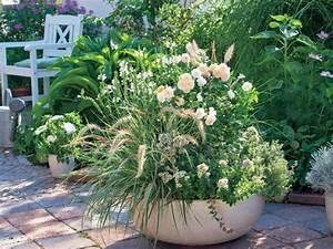 Ziergräser Im Garten Bilder : 7 besten blumenkasten lila bilder auf pinterest gartengestaltung ideen balkon und garten pflanzen ~ Sanjose-hotels-ca.com Haus und Dekorationen
