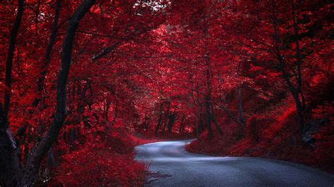fonds decran  routes automne rouge arbres nature