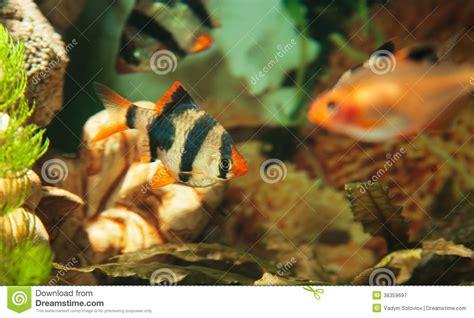 poisson aquarium eau chaude 28 images l aquarium d eau chaude mes poissons tom co les 37