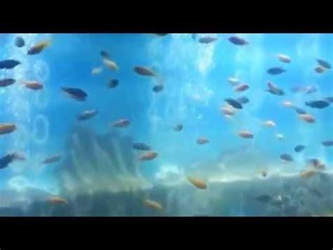 taraporewala aquarium mumbai one day newly renovated taraporewala aquarium fish museum mumbai