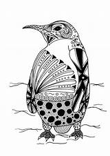 Coloring Adult Penguin Intricate sketch template