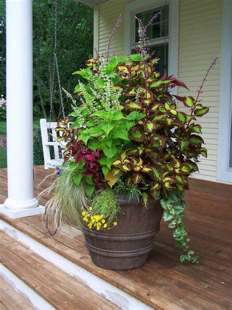 top 10 container gardens for your patio rojabonita