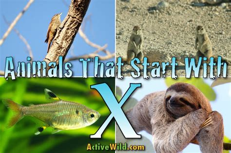 animals that start with the letter i animals that start with x list of amazing animals 7386