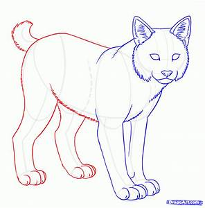 How To Draw Bobcats Bobcat Step By Step Forest Animals