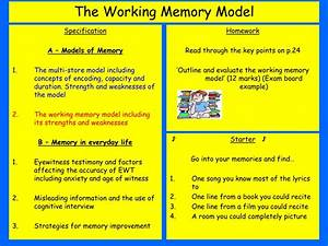 Ppt, -, The, Working, Memory, Model, Powerpoint, Presentation, Free, Download