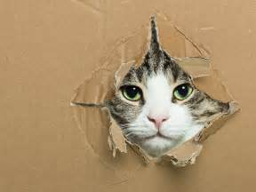 what is the cat why do cats like boxes mental floss