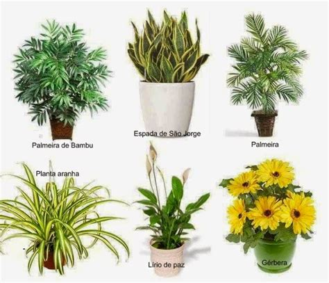 Cia da Terra: Com as plantas certas, é possível reduzir a ...