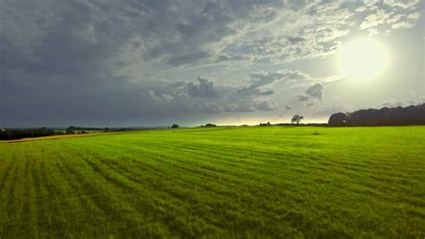 beautiful flatland grassland meadow green grass field