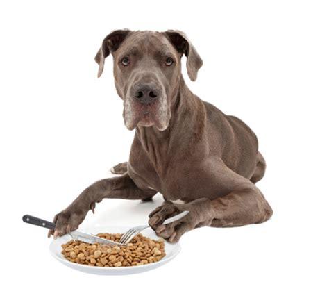 deusche dogge hundefutter trockenfutter und nassfutter