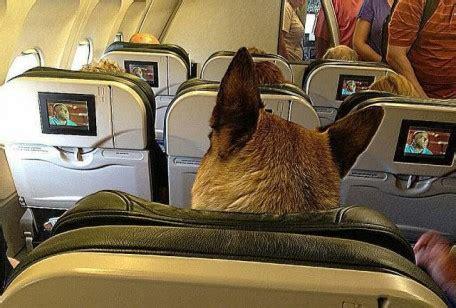 cani in cabina aereo in aereo col mio amico da pastore tedesco da