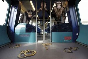 Copenhagen commuters get a big, slithering surprise | The Star