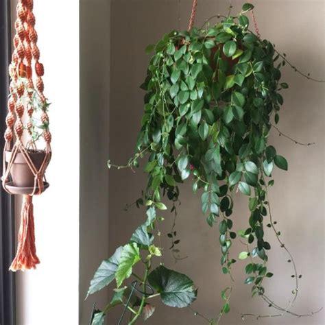 plantes vertes interieur faciles entretien design de maison