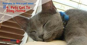 reasons to hire a pet sitter 4 pets stay at home With dog sitters that stay at your home