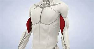 Biceps Tendon Repair In Marin  Ca