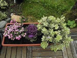 Fleur D Hiver Pour Jardinière : pot es d 39 hiver le jardin d 39 isa ~ Dailycaller-alerts.com Idées de Décoration