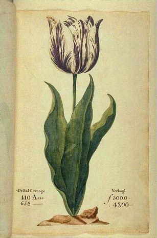 maddie s ancestor search tulipmania