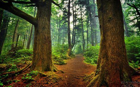 Trees Breathtaking Landscapes