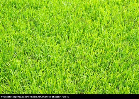 rasenmä auf rechnung fu 223 rasen soccer grass lizenzfreies foto