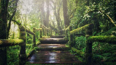 Wallpaper forest, green, 5K, Nature #19712