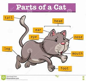 Diagram Showing Parts Of Cat Stock Vector