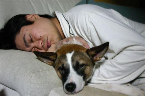 Sleeping With Bo Sleeping With Bo Joi Ito Flickr