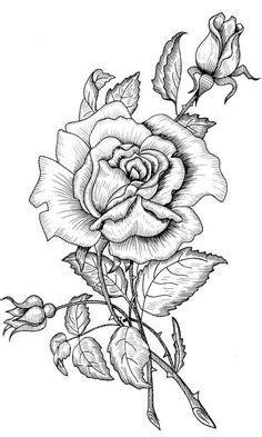ROSE VINE SILHOUETTE SVG, #CRICUT, #CRICUTEXPLORE | CRICUT IMAGES: PLANT LIFE | Pinterest