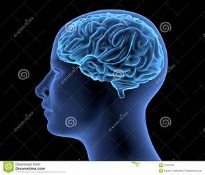 The Human Body - Brain Royalty Free Stock Image