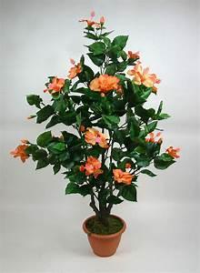 Hibiskus Hat Blattläuse Was Tun : hibiskusbaum 90cm orange ga kunstpflanze hibiskus ebay ~ Lizthompson.info Haus und Dekorationen