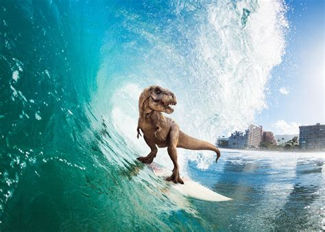 surfing  rex hd   wallpapers images