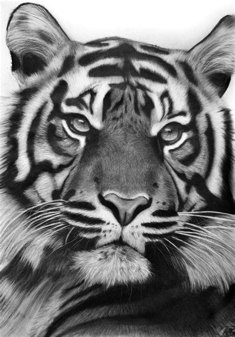 This is a drawing of my first tiger which is, what I think, one of the most beautiful animals in