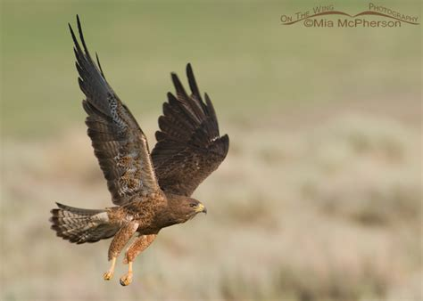 time  count hawks migration week