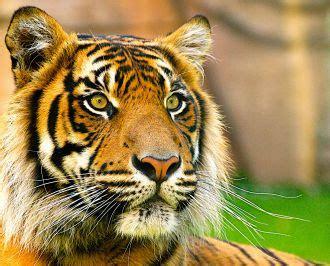 protect animals  holiday  wild animal abuse