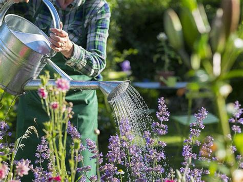 gardening picture the health benefits of gardening saga