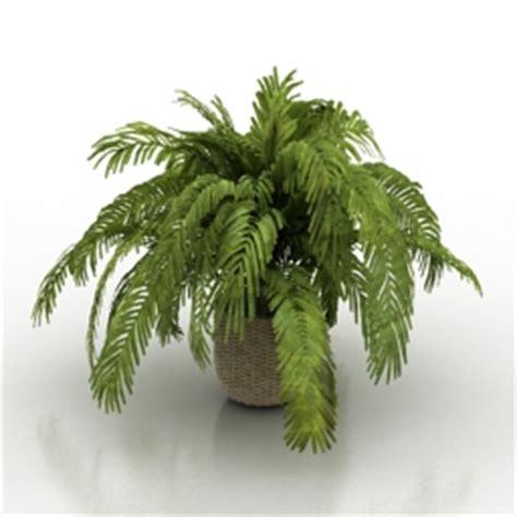 plant   models
