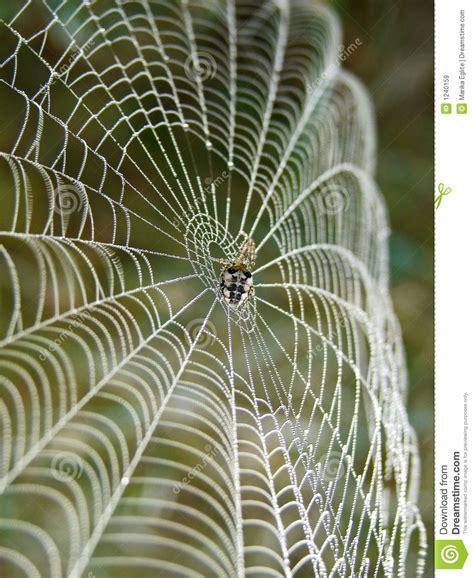 toile d araignee image stock image du cobweb charme 1240159