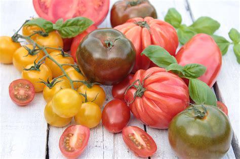 beste zeit zum tomaten pflanzen gesunde tomatenpflanzen umweltbundesamt