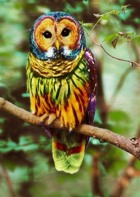 short update   energies owl search  colorful owl