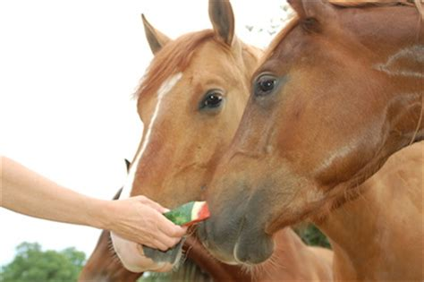 what do horses eat eat hartzlerdm testing